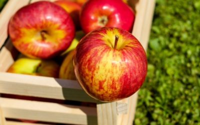 Fall is Approaching and Apple Season is Here!